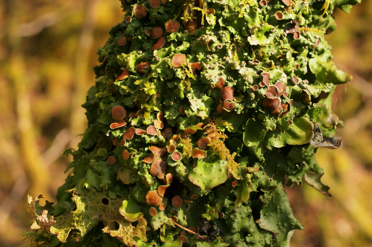 Leafy green and brown lichen round a tree trunk