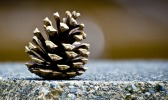 pine cone on a table