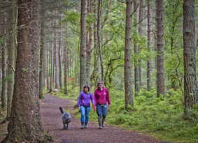 Two women walking a dog through tall conifer trees
