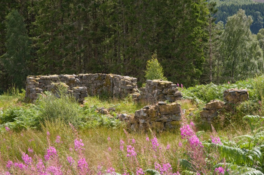 Ruin of a cottage, overrun with wild flowers