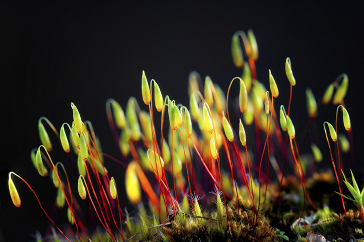 Close up of tiny bright green leaves or mosses against a black background