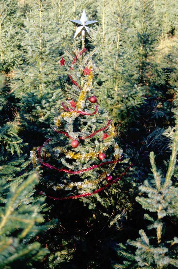 Decorated Christmas tree outside in a forest
